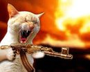 Cat Rambo reports for duty!