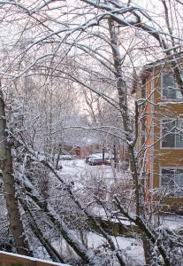 Snow in Redmond