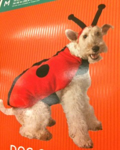 Dog in a ladybug costume