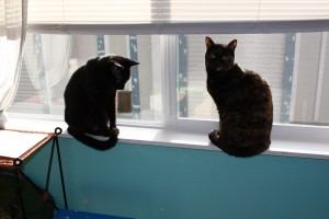 Image of two cats in a window