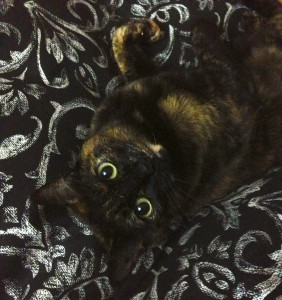 Picture of a tortoiseshell cat, upside down and looking cute.
