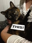 Picture of a tortoiseshell cat.
