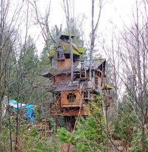 Photo of an odd treehouse