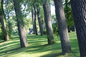 Photo of trees in Leeper Park, South Bend, Indiana.